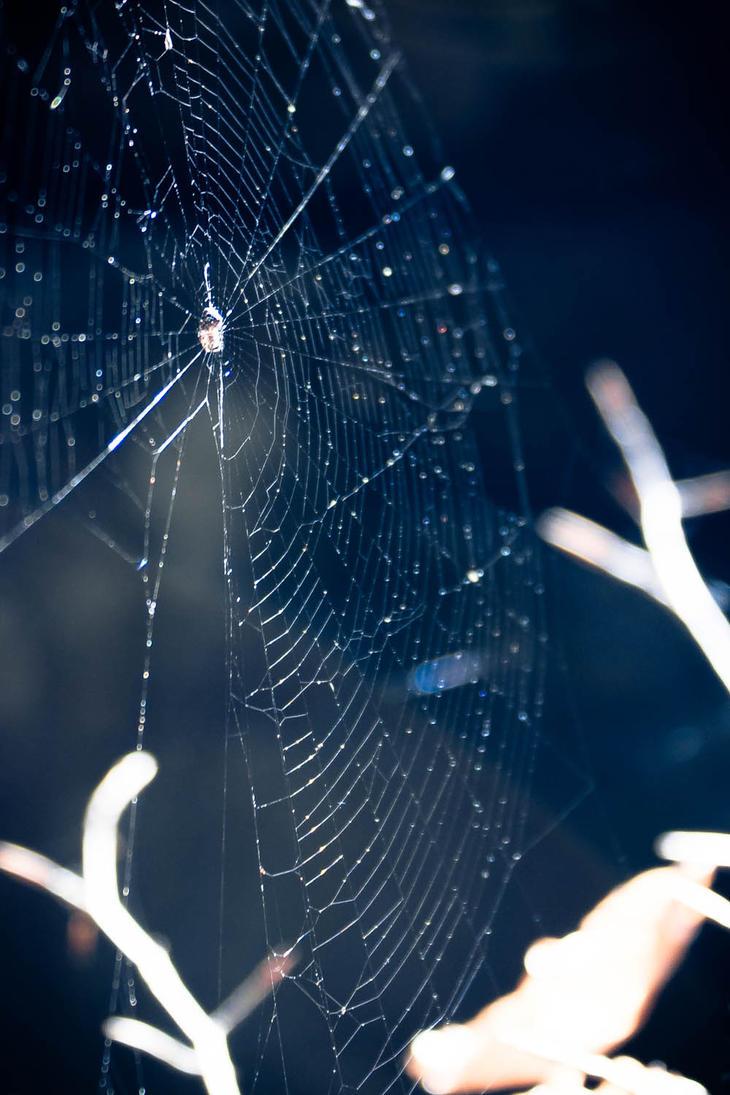Web by Fr34kZ