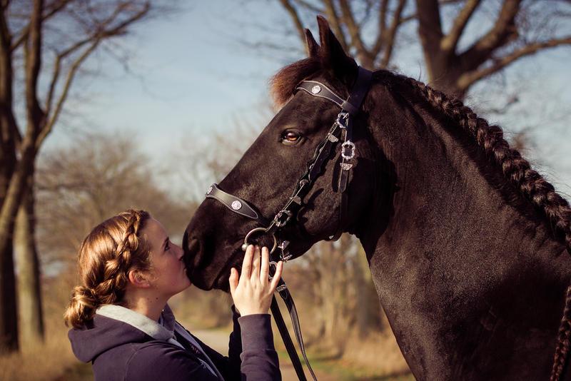 Horsemanship III by Fr34kZ