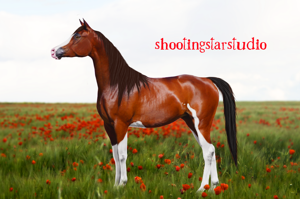 Heart by ShootingStarStudio