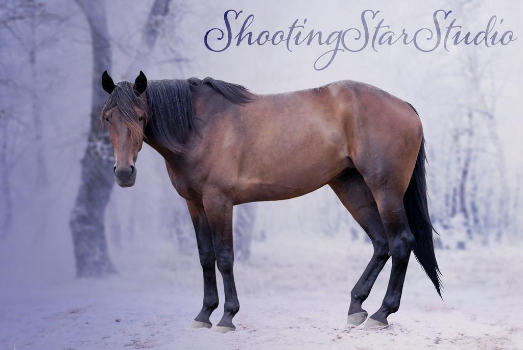 Purple Rain by ShootingStarStudio