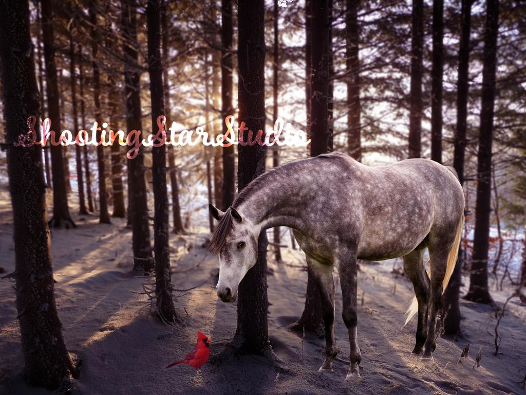 Christmas Magic by ShootingStarStudio