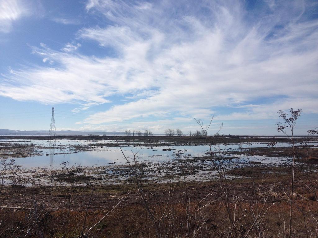 Arcata marsh by trinafool