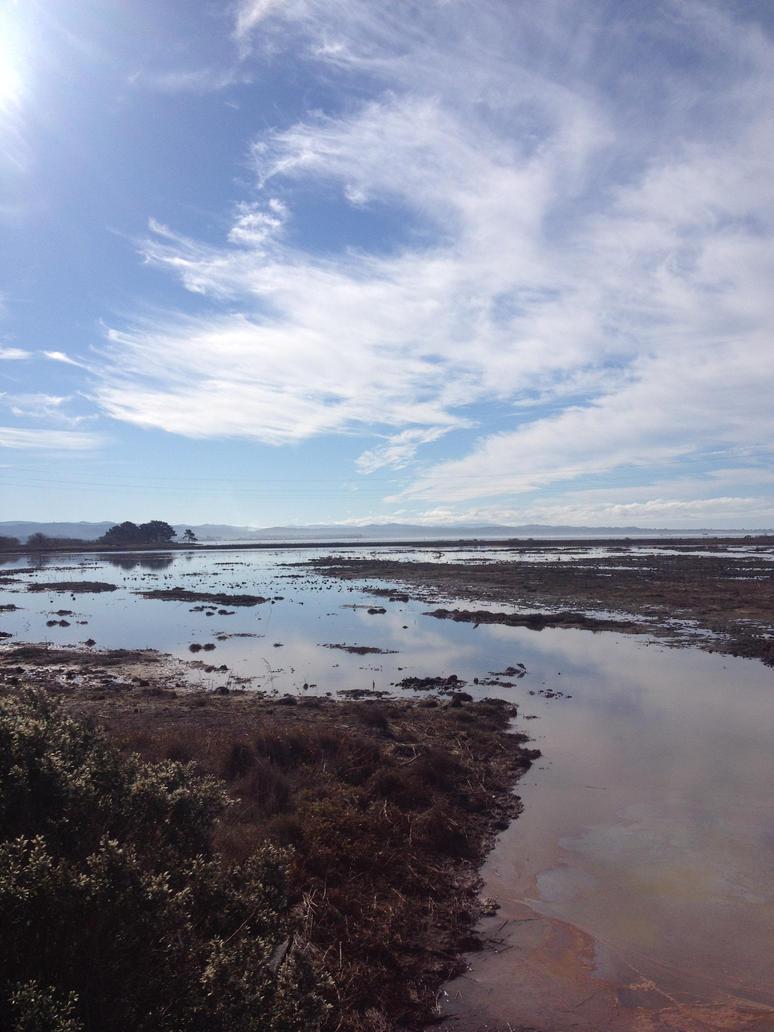 Arcata marsh 2 by trinafool