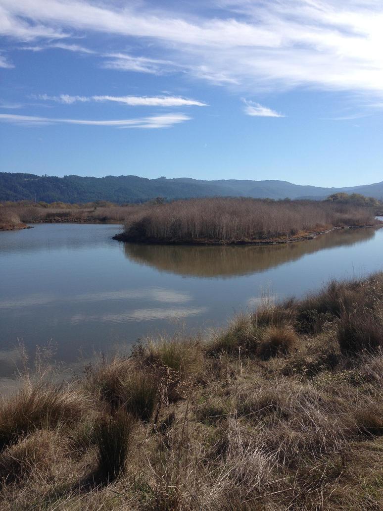 Arcata Marsh 3 by trinafool