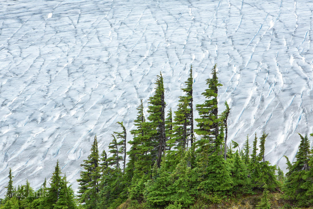 Trees watching the glacier go by... by Milanogreg