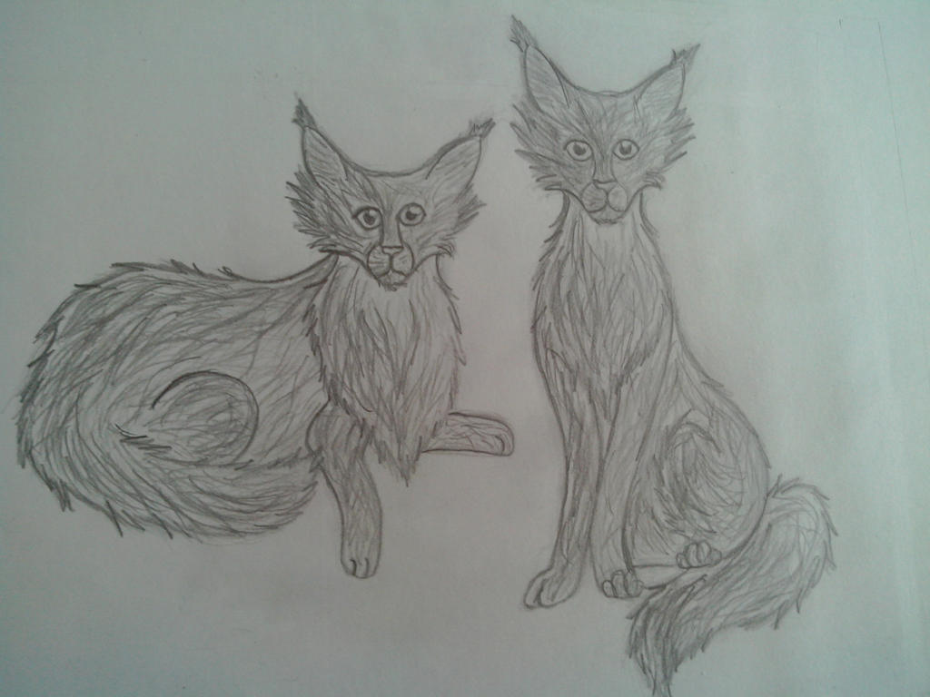 Maine Coons by oOFrosteehOo