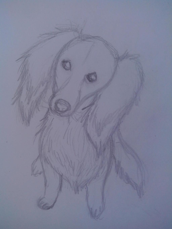 Sketch Dackel by oOFrosteehOo