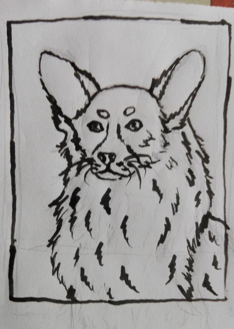 Corgi Ink Drawing by oOFrosteehOo