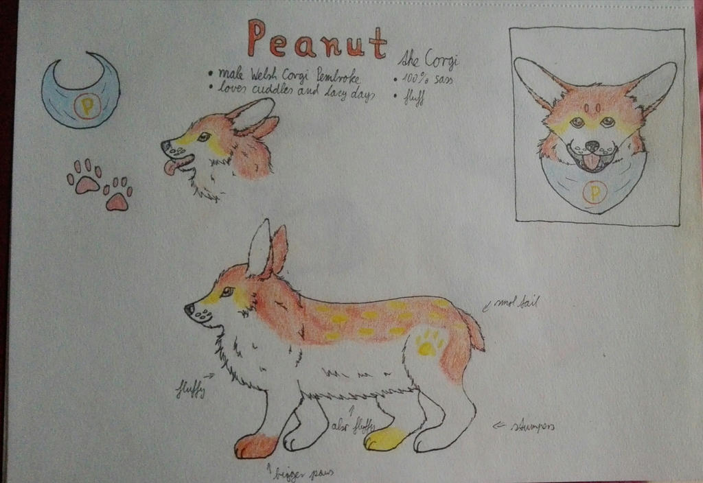 Peanut Reference sheet by oOFrosteehOo