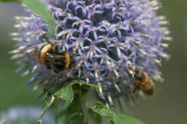 The royal Nectar Hunt