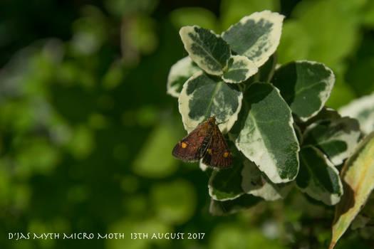IMGP6116 Micro Moth 2 e crop