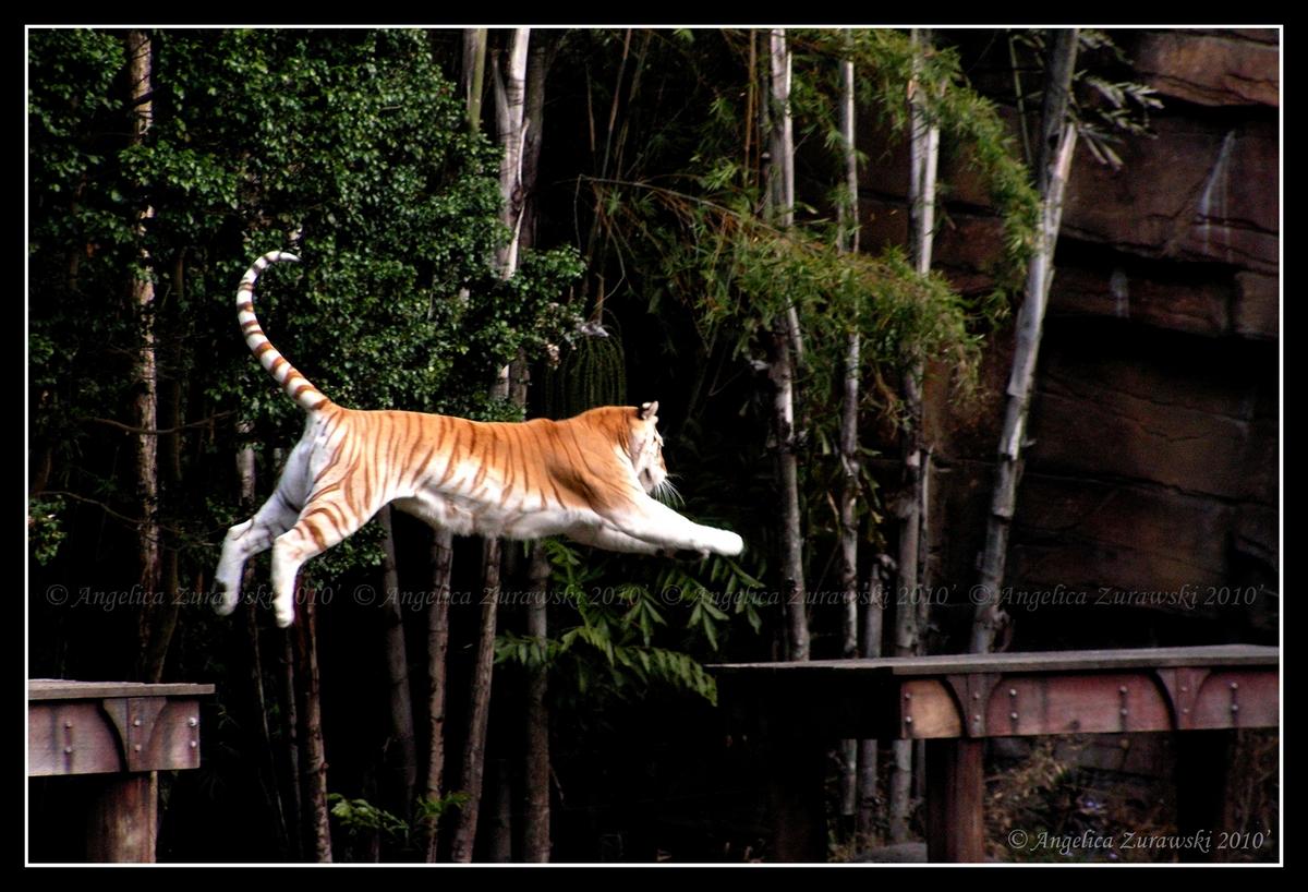 Jump by endzi-z