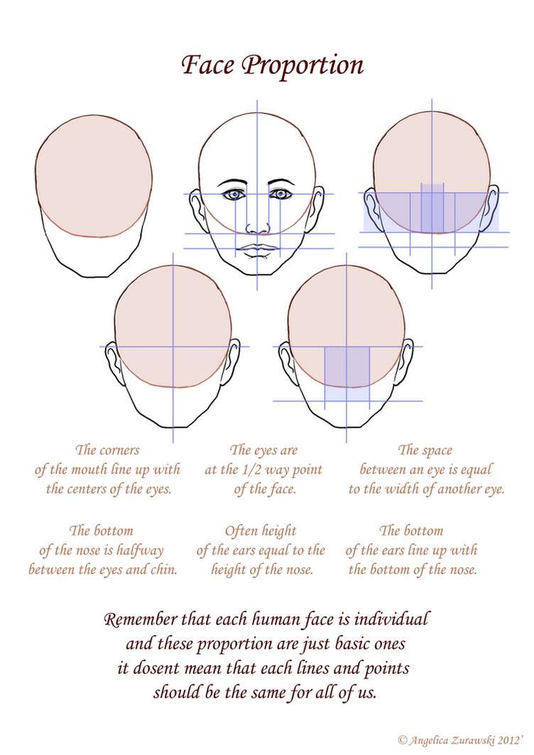 Face Proportion by endzi-z