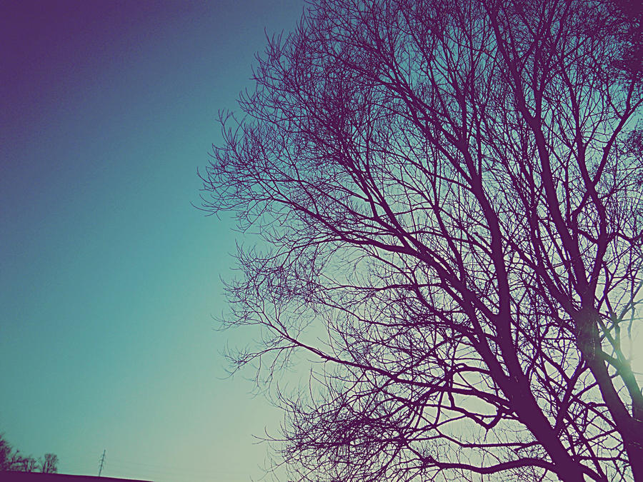 tree and sky. by vycapeneMORCE