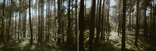 Forest light - stock (2 images) by koko-stock