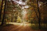 Autumn Background stock