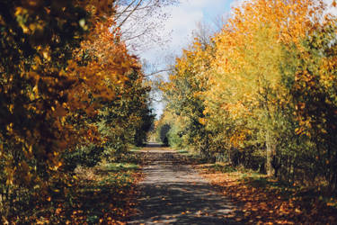 Autumn Path stock hd