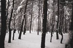 Winter forest stock by koko-stock