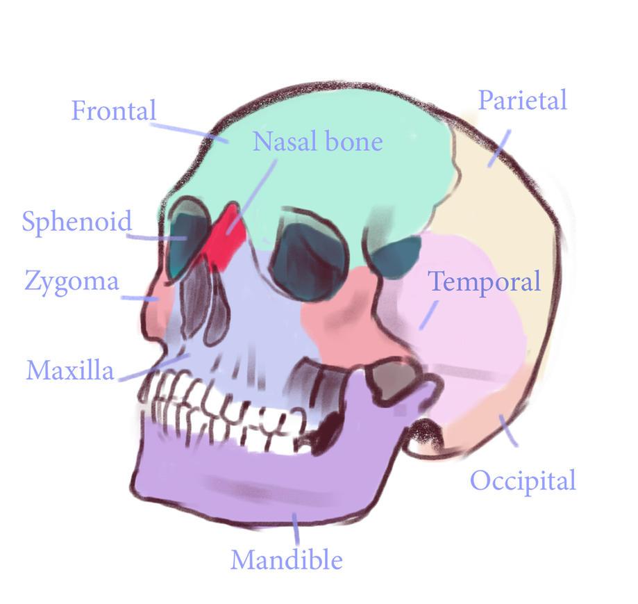 Skull 4 by Prywinko
