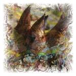 Atlas Of Dreams-Color Plate 73