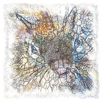 The Atlas of Dreams - Color Plate 214