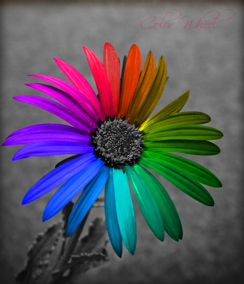 Color Wheel By Gezusfreek