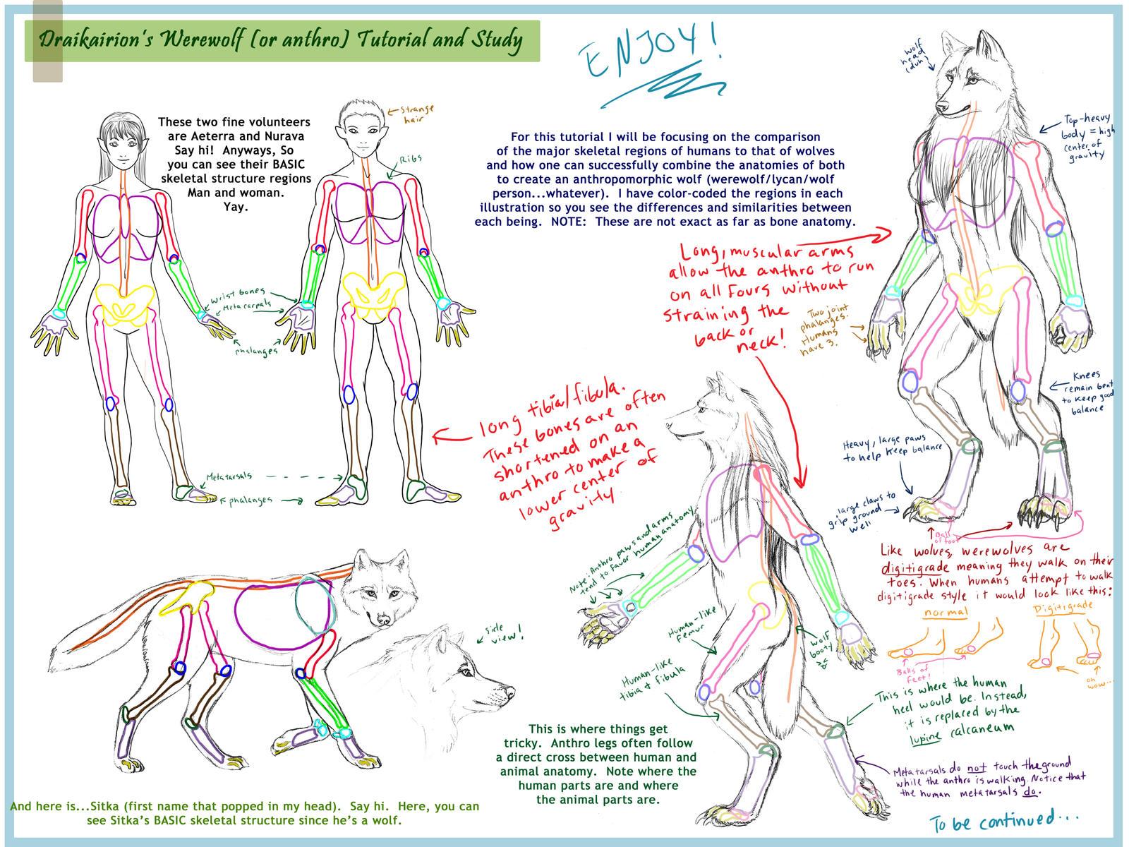 Werewolf Anthro Tutorial pt. 1 by Draikairion