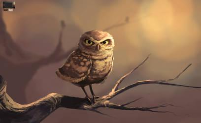 Video - Owl by danielbogni