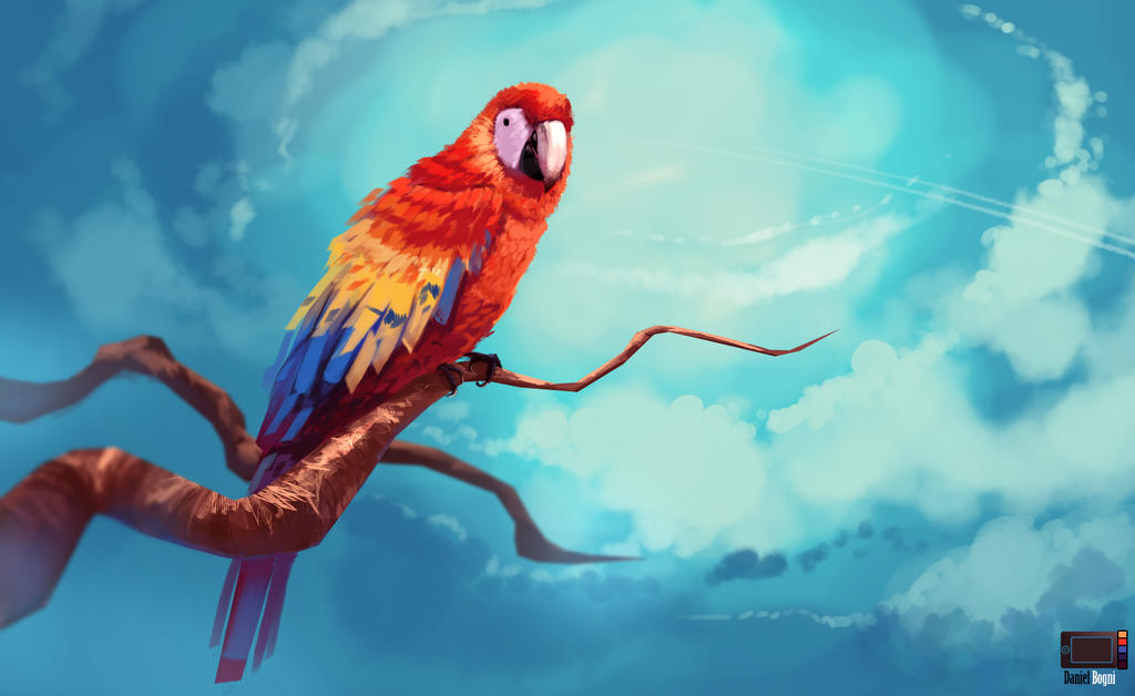 Video - Macaw by danielbogni