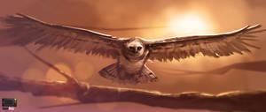 Video - Harpy