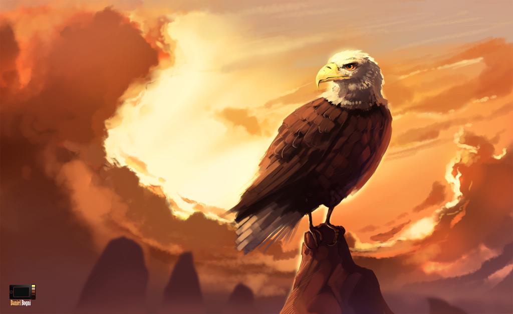 Video - Eagle by danielbogni