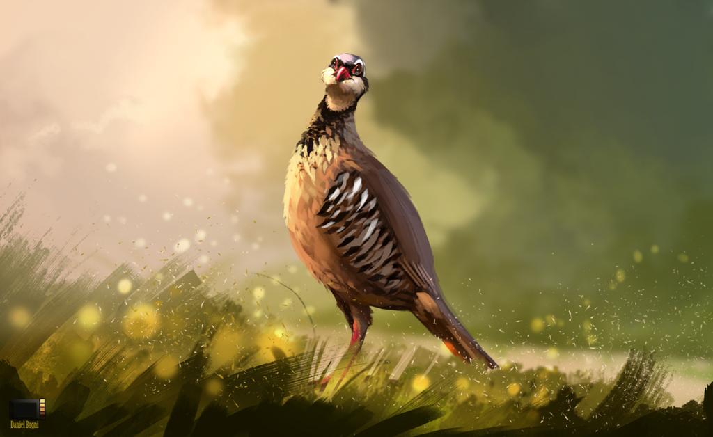 Video - Partridge by danielbogni