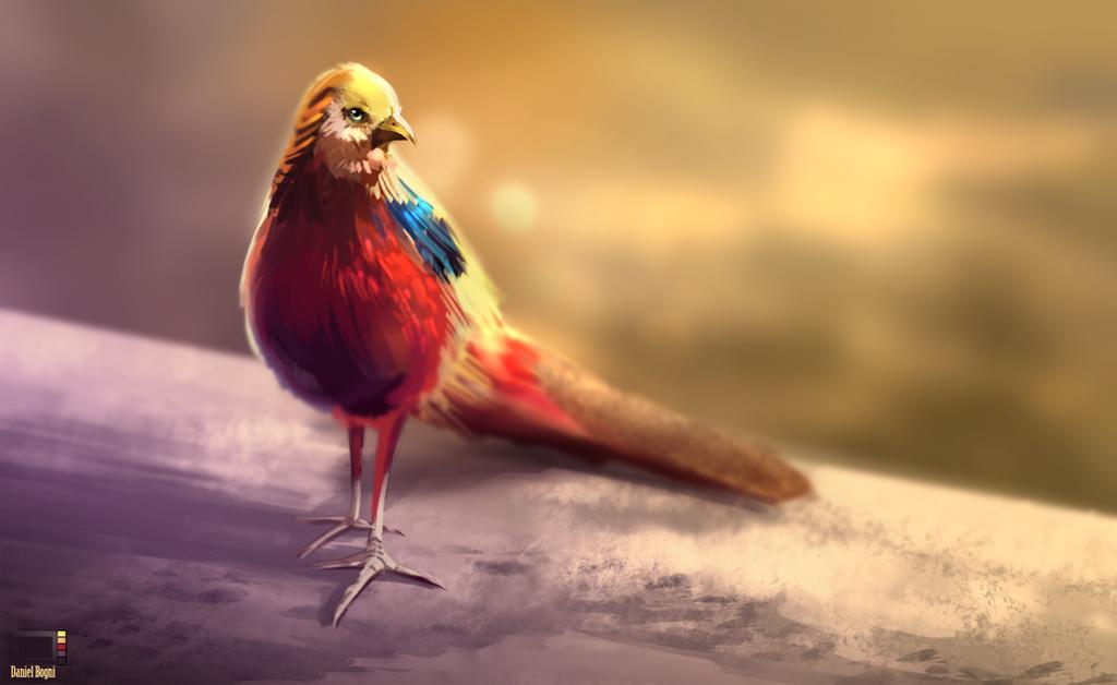 Video - Pheasant by danielbogni