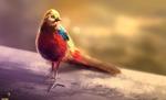 Video - Pheasant