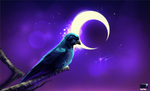 Video - Azul