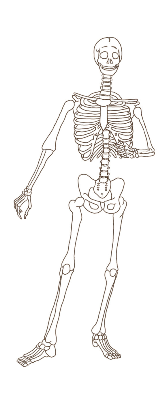 Skeleton by SteelToad