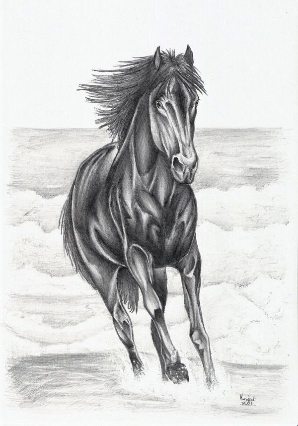 Running Horse by Ragewalker on DeviantArt - photo#23