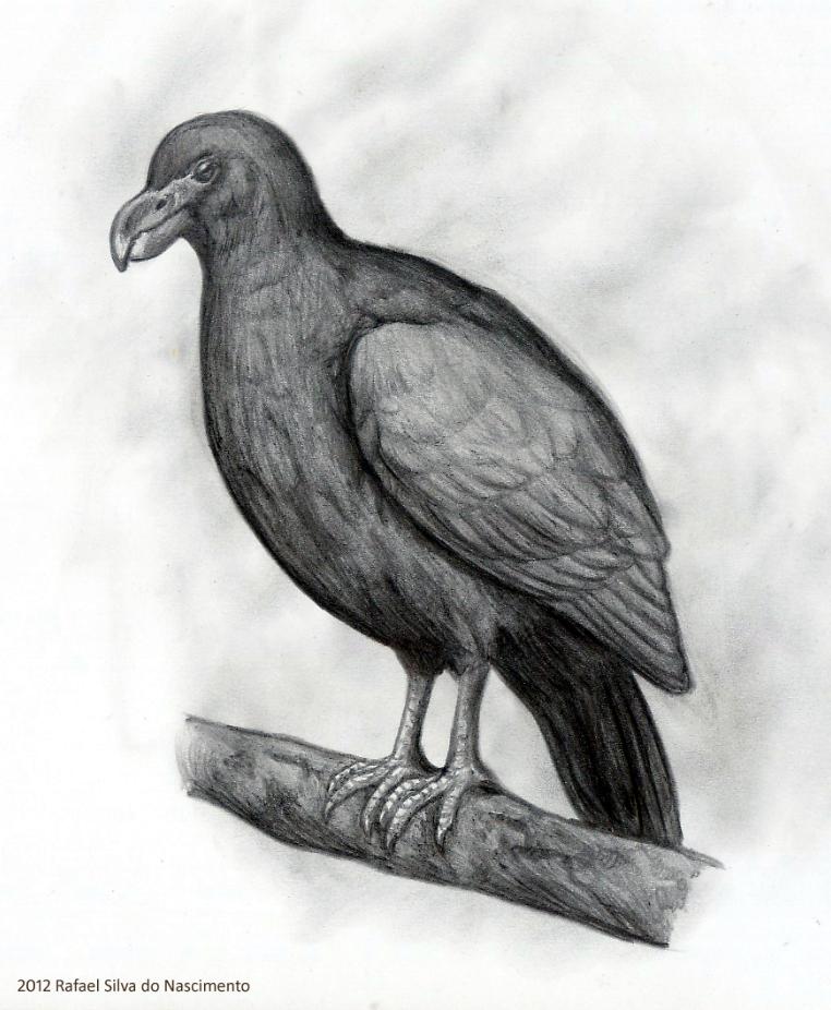Tooth-billed Pigeon by RSNascimento on deviantART