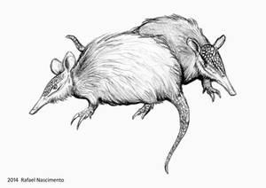 Dasypus pilosus