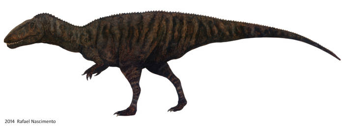 Carcharodontosaurus saharicus by RSNascimento