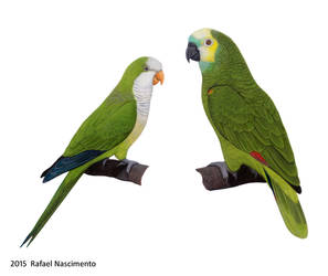 Parrots by RSNascimento