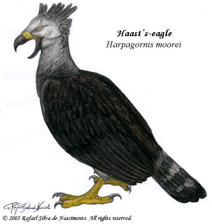 Haast's-eagle by RSNascimento on DeviantArt