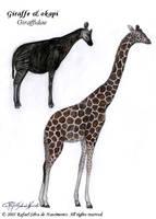 Giraffidae by RSNascimento