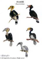 Hornbills by RSNascimento