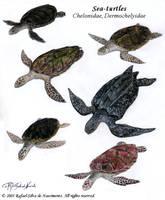 Sea-turtles by RSNascimento