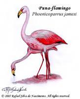 Puna-flamingo by RSNascimento