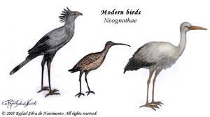 Modern birds sample plate by RSNascimento