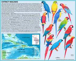 Extinct Macaws
