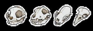 Skull bundle 1