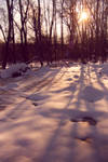 snow and shadow
